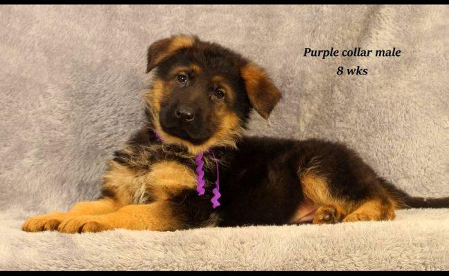 Coby-8-Purple