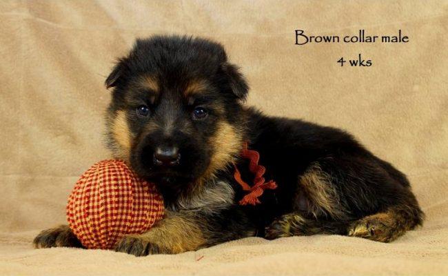 Coby-Jack-4-Brown
