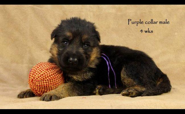 Coby-Jack-4-Purple