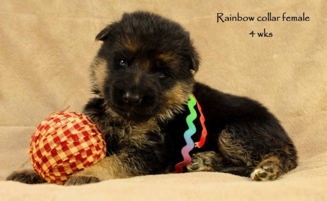 Coby-Jack-4-Rainbow