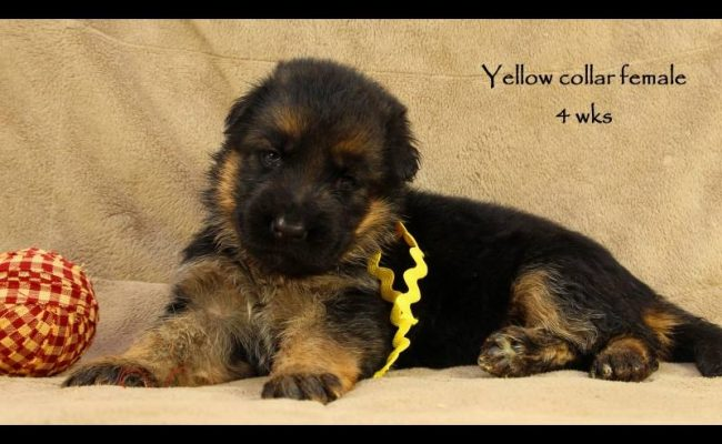 Coby-Jack-4-Yellow