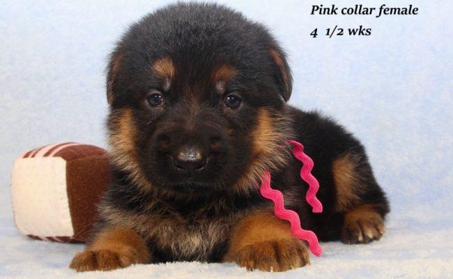 Lena-45-Pink