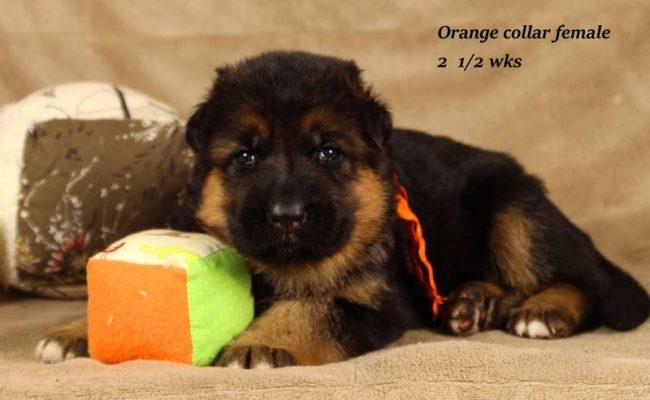 Philly-Dabo-25-Orange