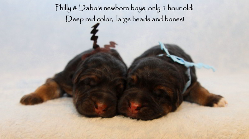 Philly-Jack-Newborns2