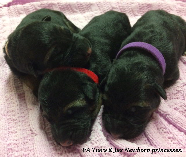 Tiara-Newborn-Females