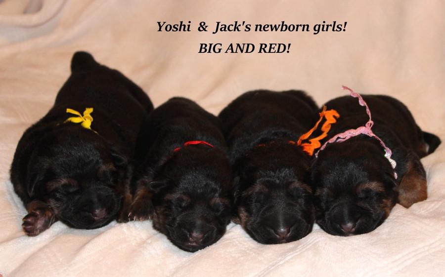 Jack & Yoshis Female Newborns