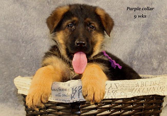 Coby 9 Purple 2
