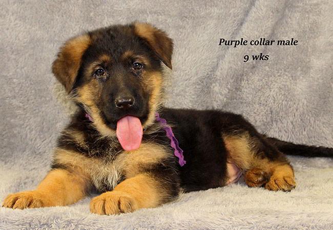 Coby 9 Purple