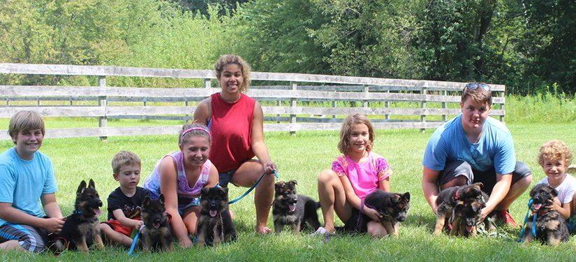 Kids Training At Mittelwest German Shepherds In Wonder Lake Illinois