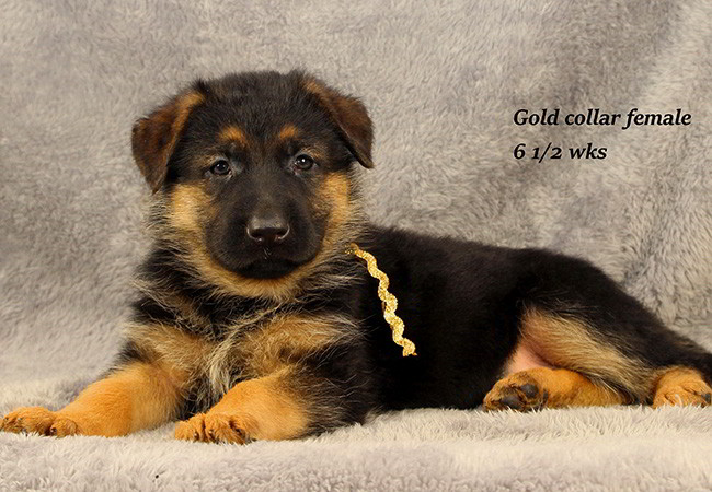 Lena 65 Gold