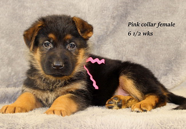 Lena 65 Pink