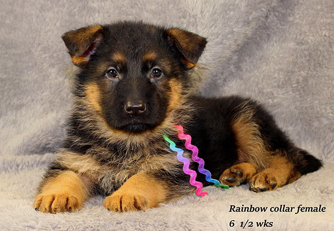Lena 65 Rainbow