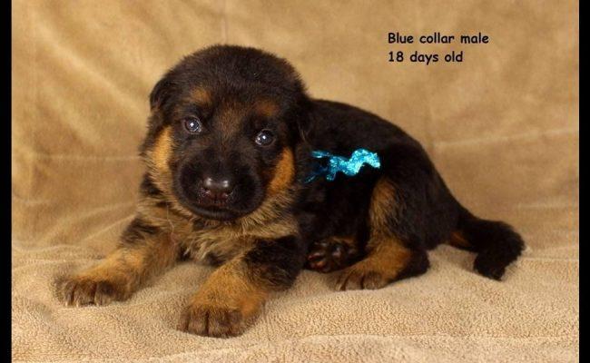 Maggie-18-Days-Blue