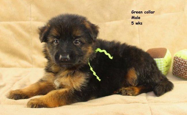Maggie-5-Green3
