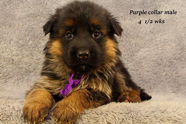 Nashville-45-Purple