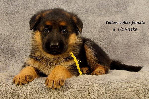 Nashville-45-Yellow