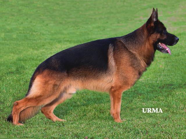 Rocco-2012-Sieger