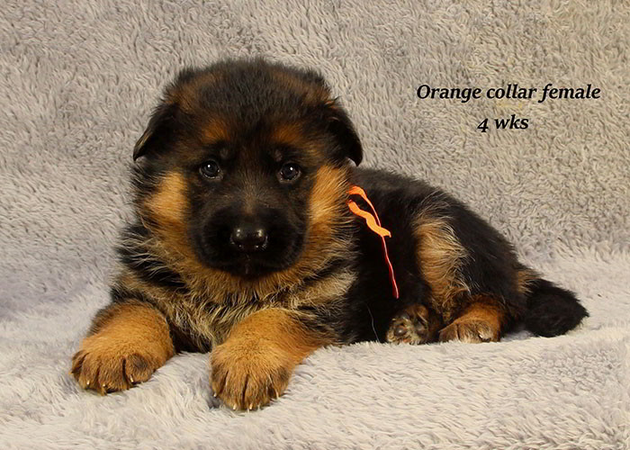 Yoshi-4-Orange