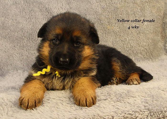 Yoshi-4-Yellow