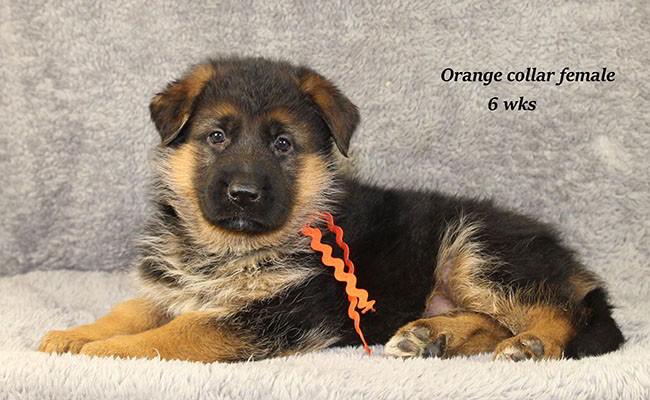 Yoshi-6-Orange