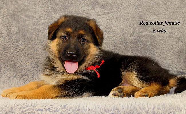 Yoshi-6-Red-4
