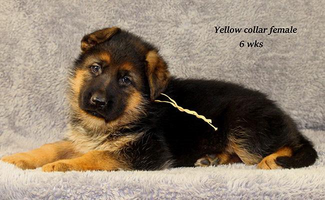 Yoshi-6-Yellow