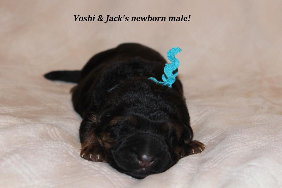 Jack & Yoshis Male Newborns