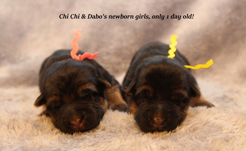 Chi Chi & Dabo Newborn Girls