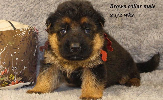 Bindi-25-Brown