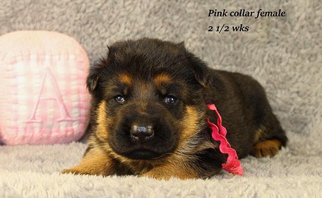 Bindi-25-Pink