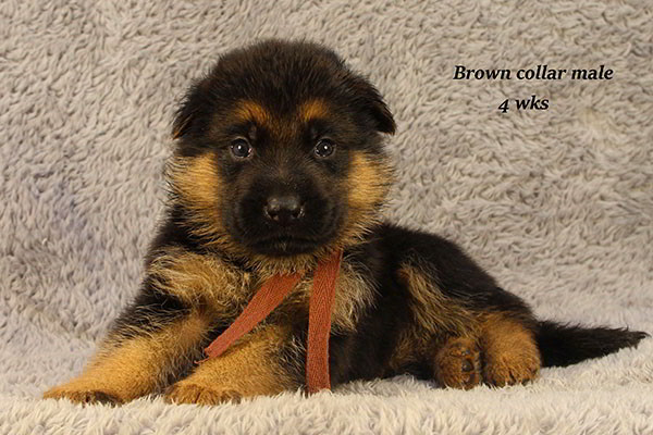 Bindi-4-Brown