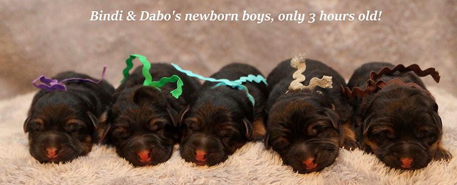 Bindi-Newborns-2