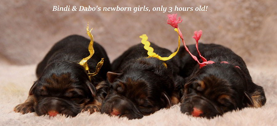 Bindi-Newborns-3