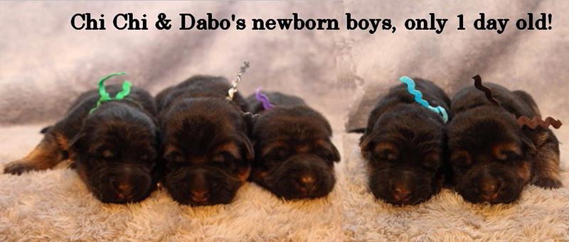 Chi-Chi-Dabo-Babies