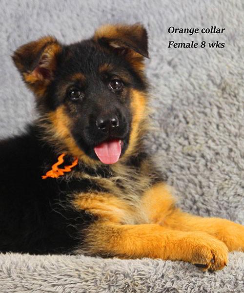 Cora-8-Orange-6