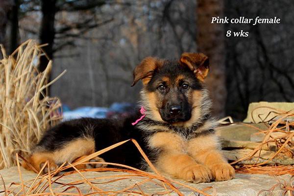 Cora-8-Pink-3