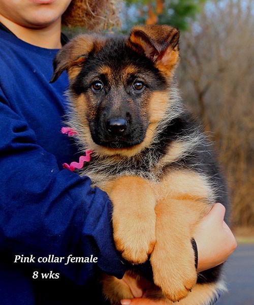 Cora-8-Pink-4