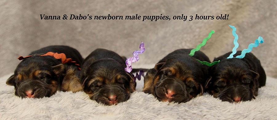 Vanna-Dabo-Newborn-Boys