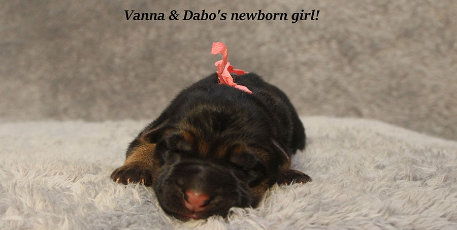 Vanna-Dabo-Newborns