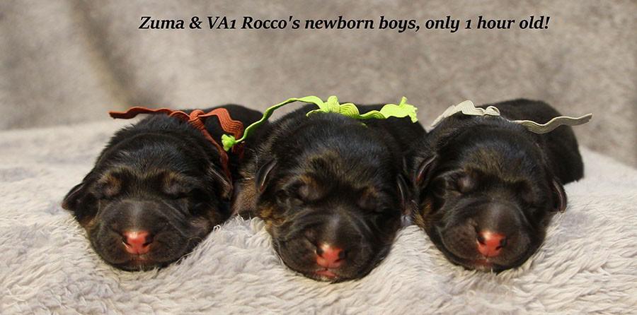 Zuma-Newborn-Boys-2