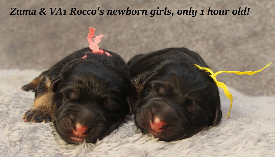 Zuma-Newborn-Girls