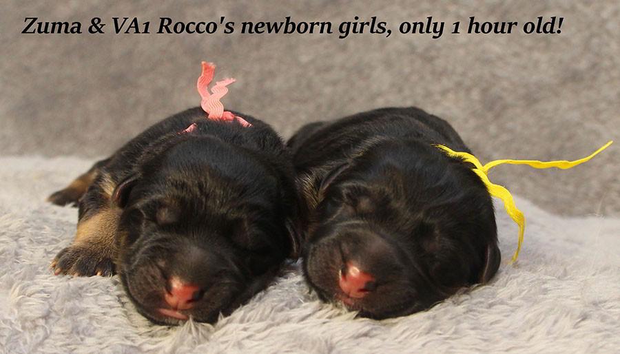 Zuma-Newborn-Girls