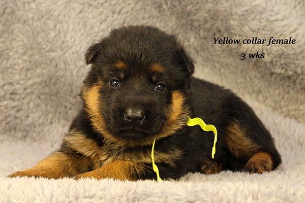 Utah-3-Yellow