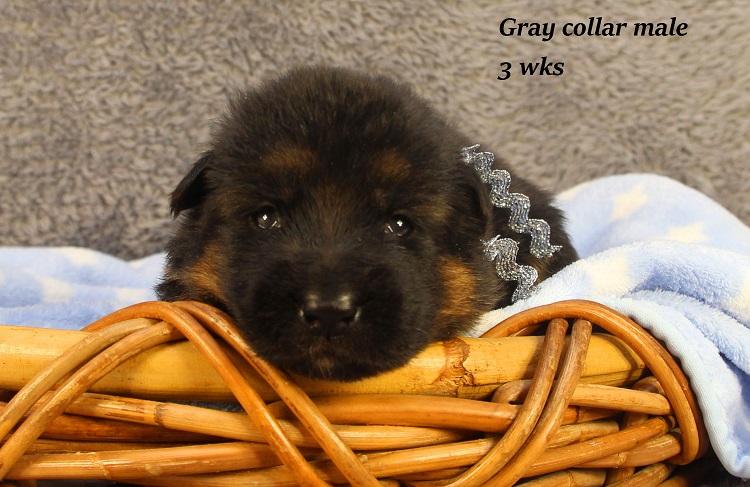 gotcha-3-gray3