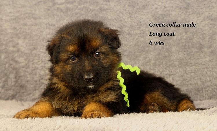 gotcha-6-green