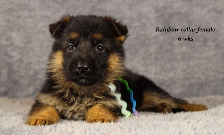 gotcha-6-rainbow