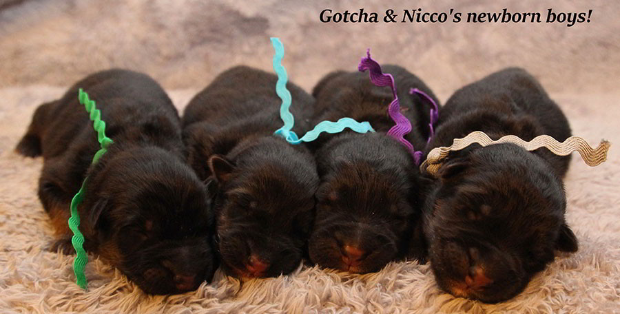 Gotcha-Nicco-Newborns-2