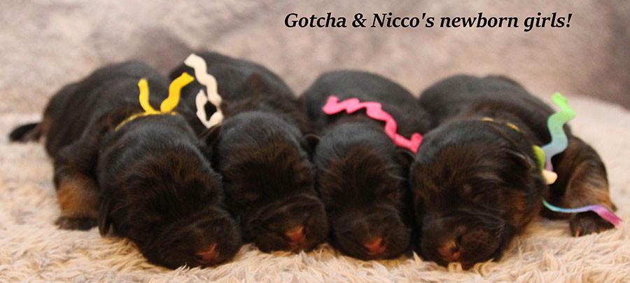Gotcha-Nicco-Newborns
