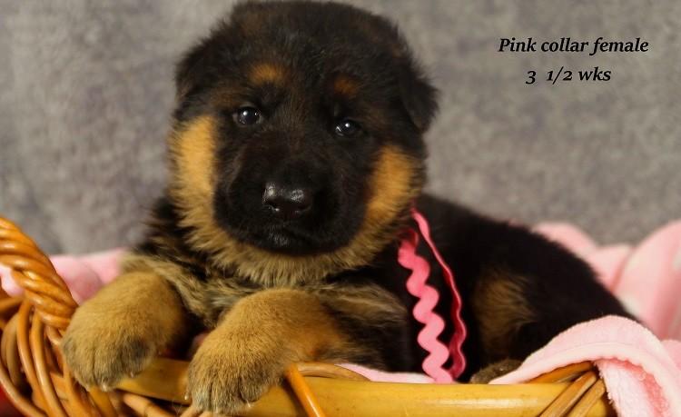 marta-3-pink2
