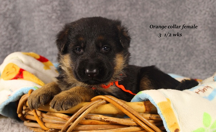 marta-35-orange